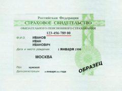 Страховой номер индивидуального лицевого счета – СНИЛС